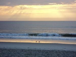 The Birds enjoying the Beach with me